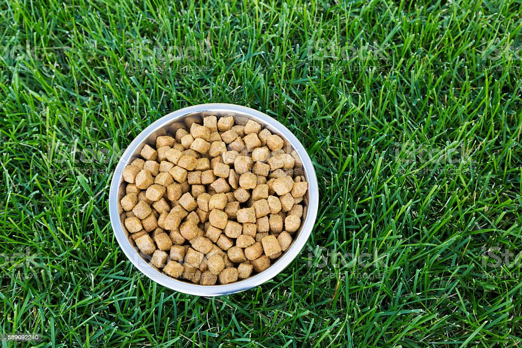 Dog Food in Stainless Steel Bowl on Green Grass stock photo