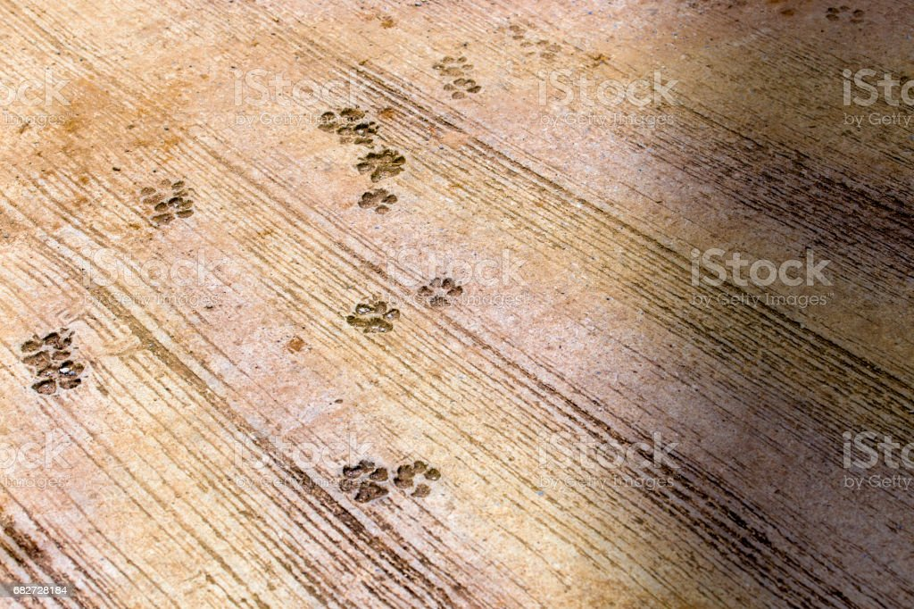 Dog foot traces on cast concrete slab. The slab shown many dog foot traces on it. stock photo