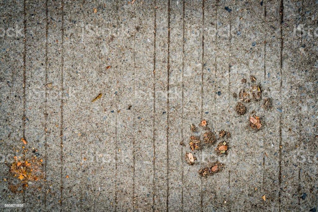 Dog footprint on cement stock photo