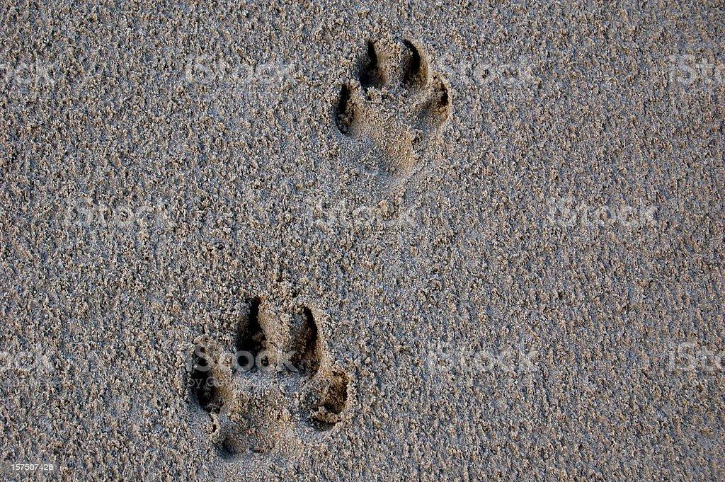 Dog Footprint royalty-free stock photo