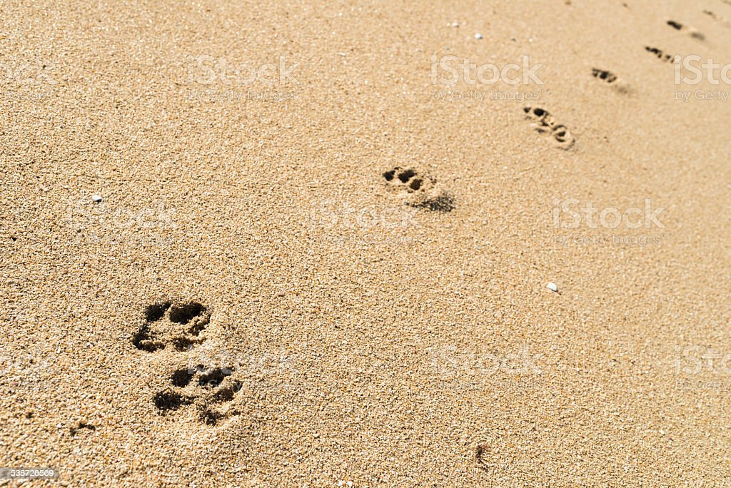dog footprints in the sand stock photo