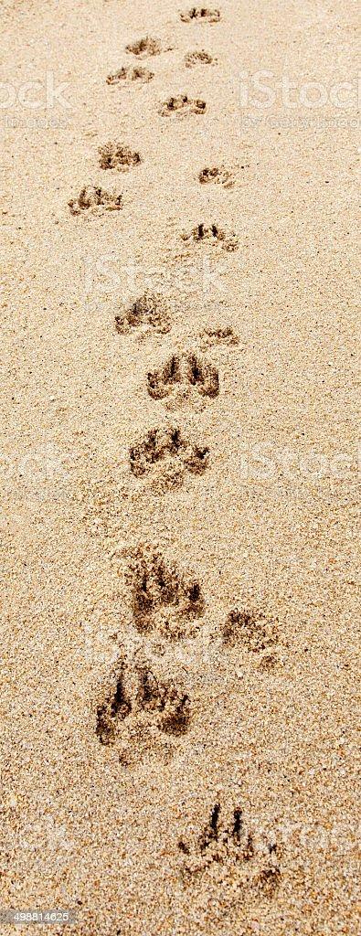 Dog Footprints on the Beach stock photo