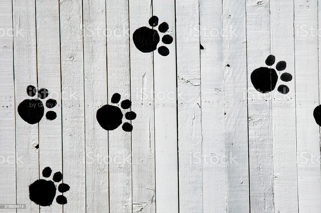 Dog Footprints stock photo