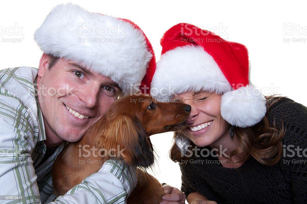 Dog for Christmas stock photo