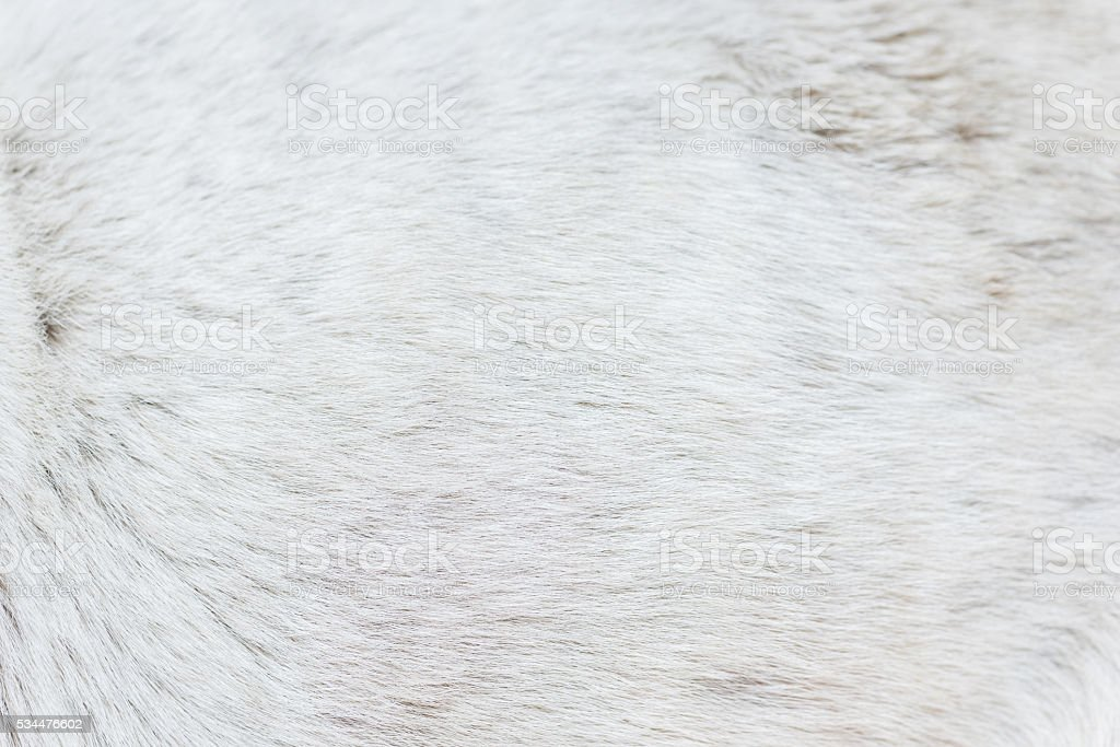 Dog fur texture stock photo