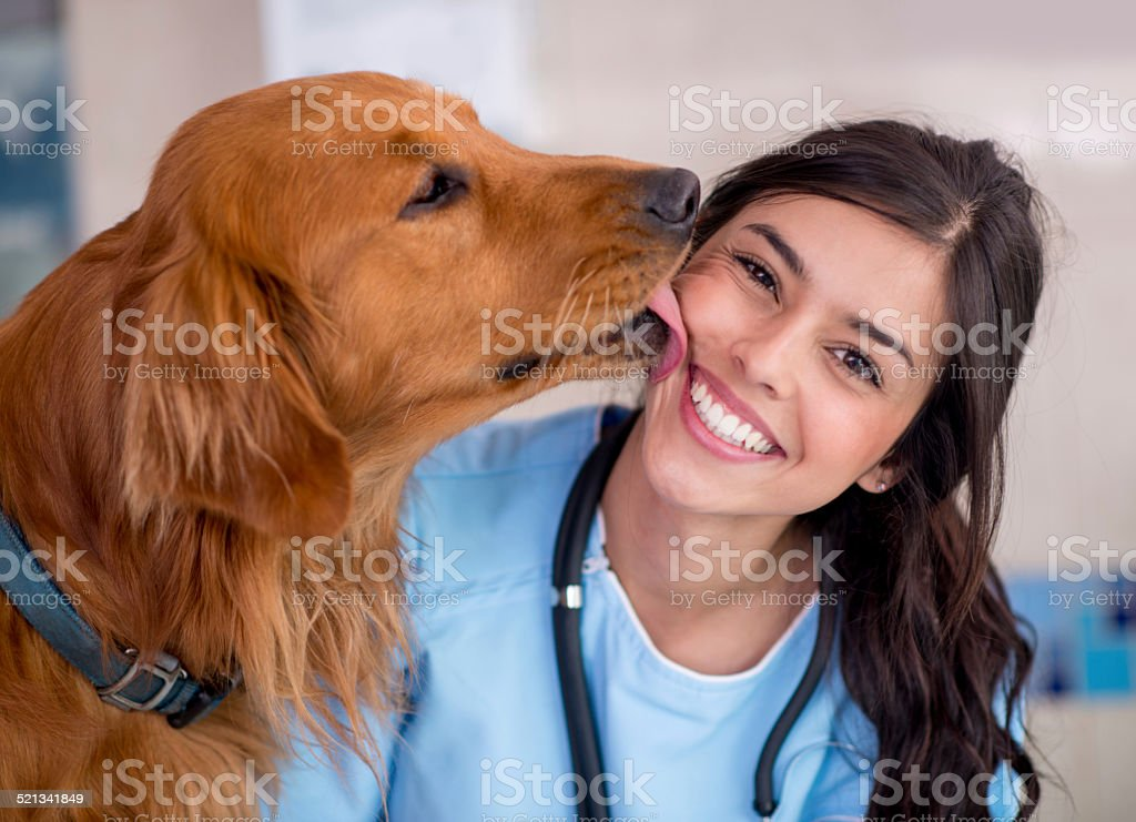 Dog giving kiss to the vet stock photo