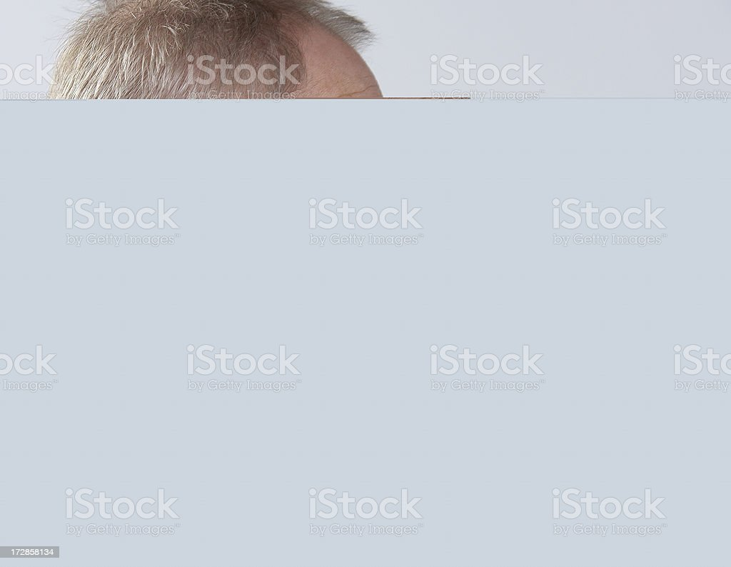 Dog gnawing on a piece of wood stock photo