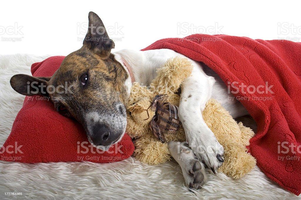 Dog Gone Tired stock photo