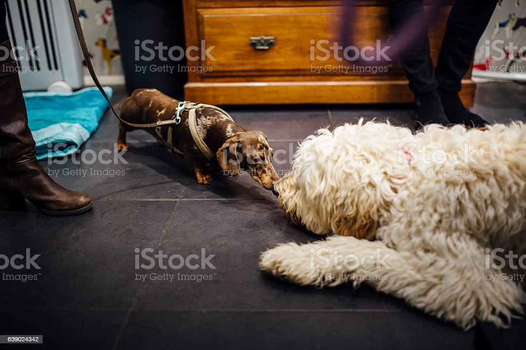 Dog Greetings stock photo
