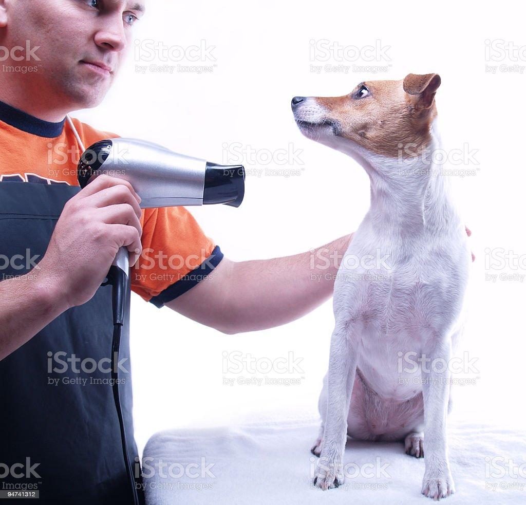 Dog Groomer royalty-free stock photo