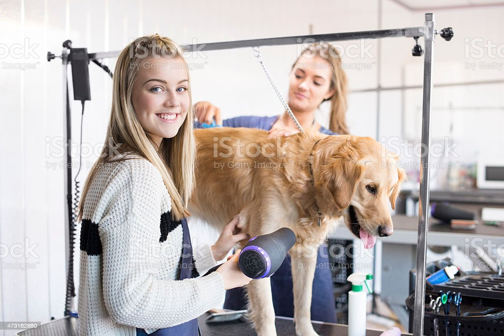 Dog groomer portrait stock photo