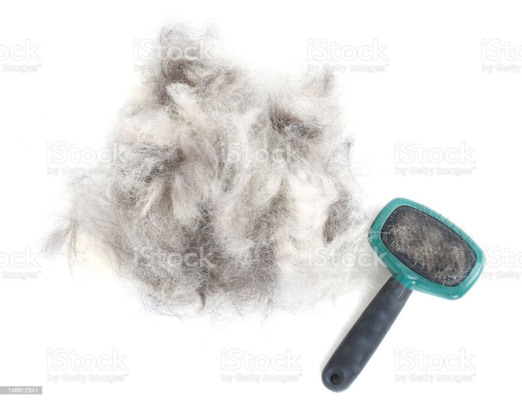Dog Grooming Brush and Hair stock photo