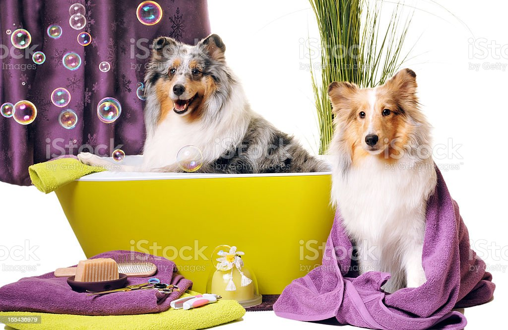 Dog grooming royalty-free stock photo