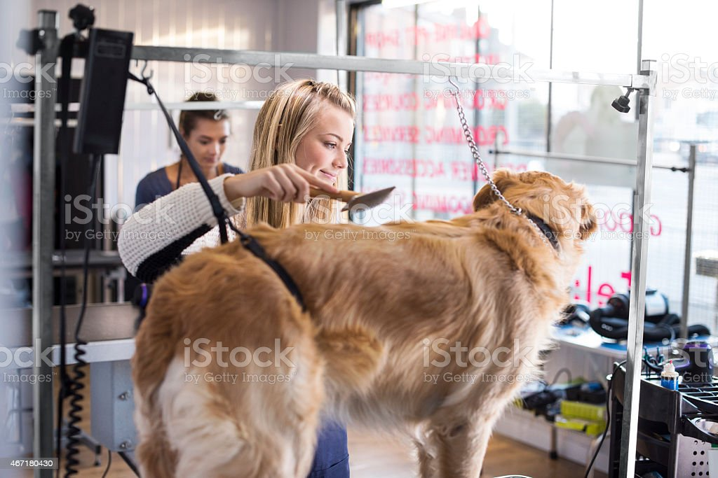 Two young female dog groomers pampering a golden retriever .One...