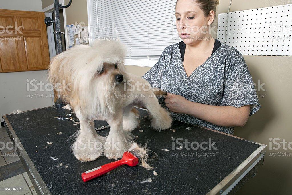 Dog grooming series royalty-free stock photo
