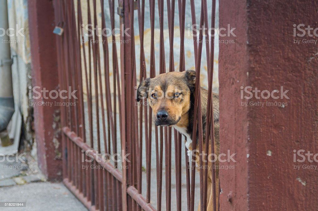 Dog guard. stock photo