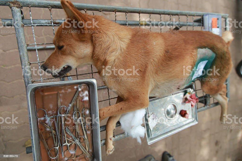 Dog have birth control stock photo