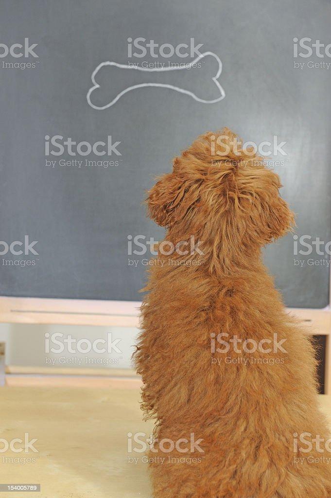 dog having class royalty-free stock photo