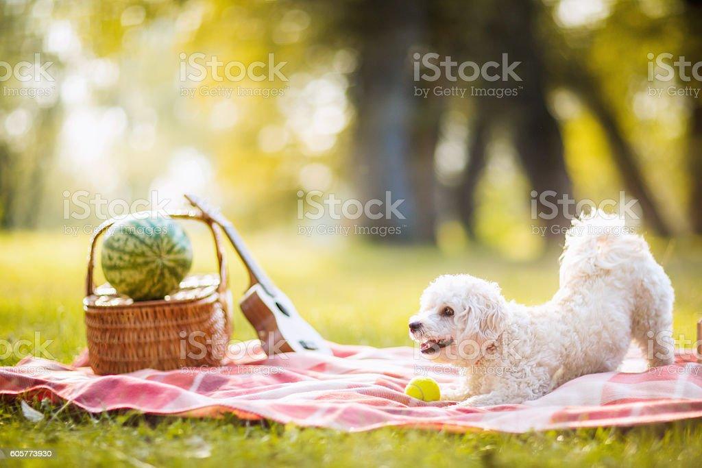 Dog having fun on picnic stock photo