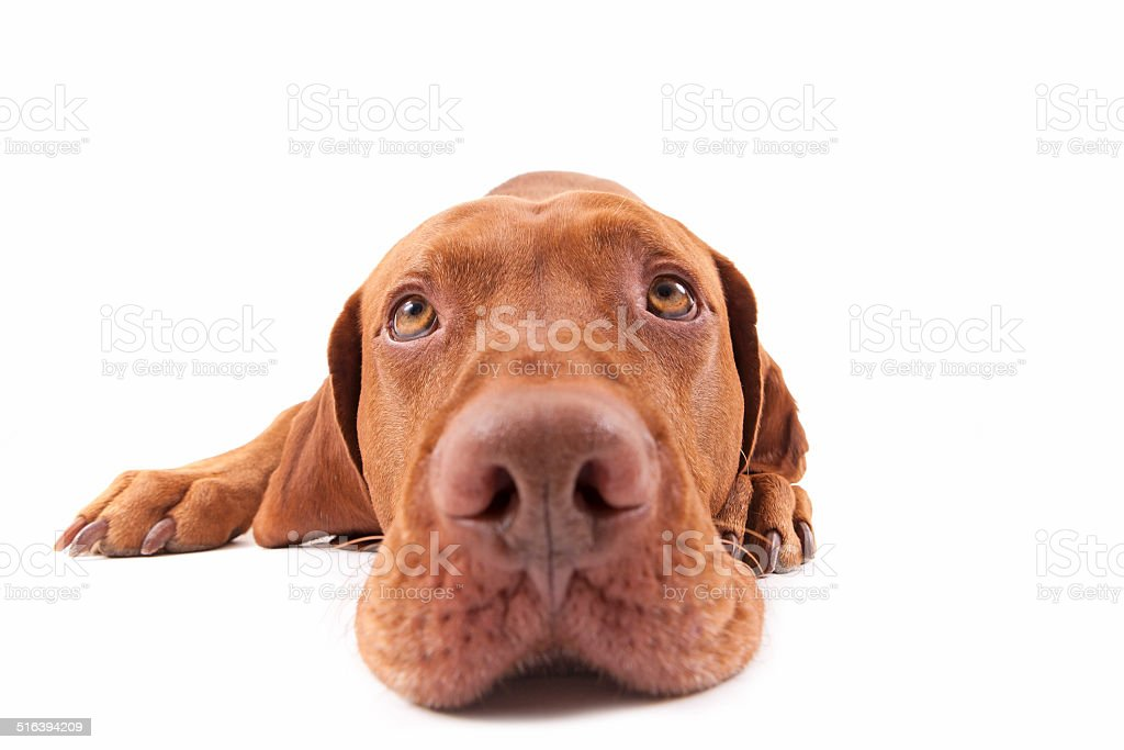 dog head extreme closeup stock photo