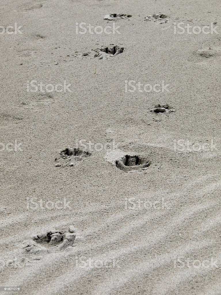 dog heels in the sand royalty-free stock photo