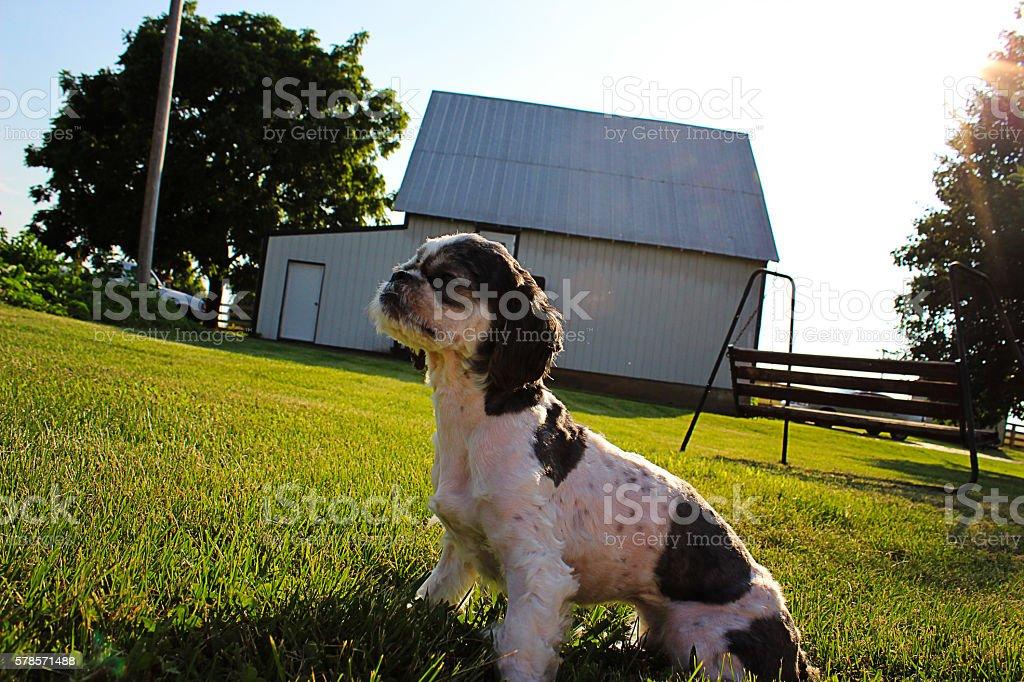 Dog Hero royalty-free stock photo