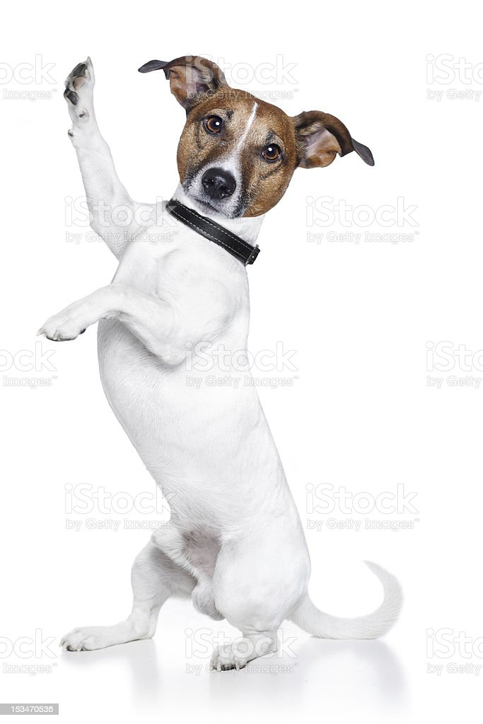 dog high five royalty-free stock photo