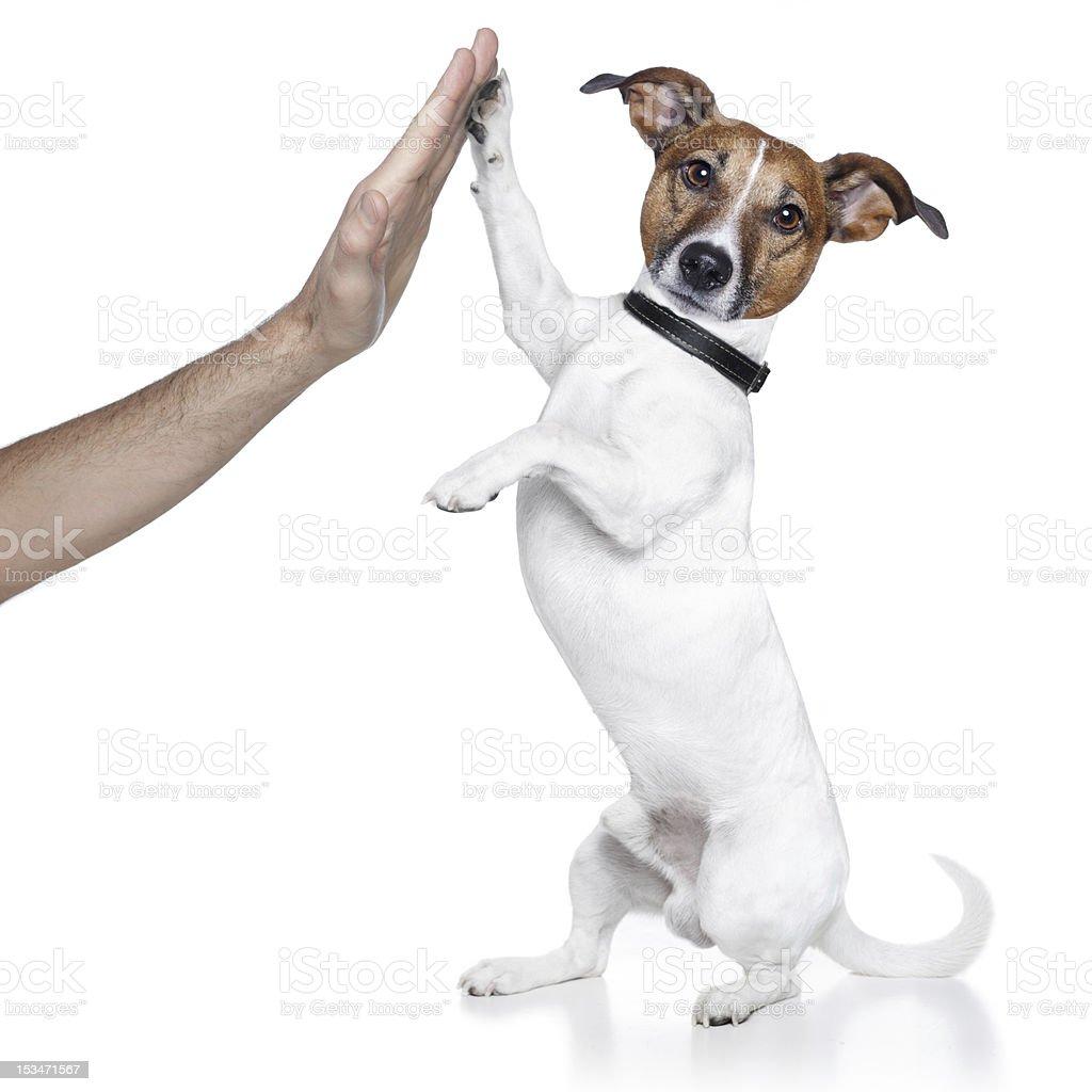 dog high five stock photo