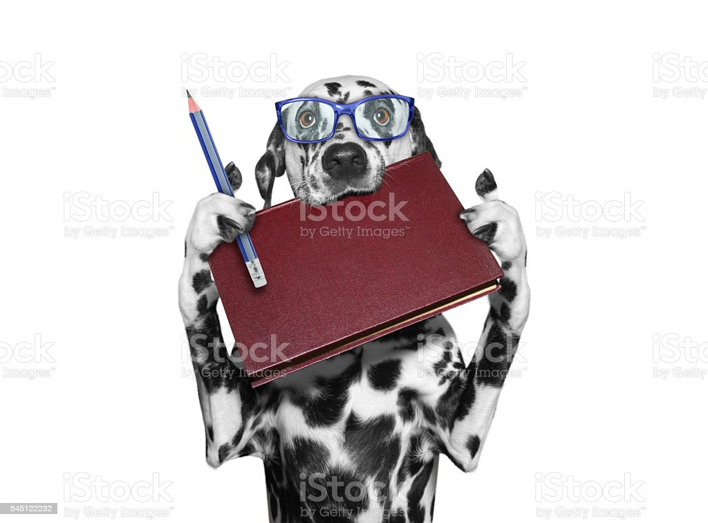 dog holding a book in his mouth and a pencil stock photo