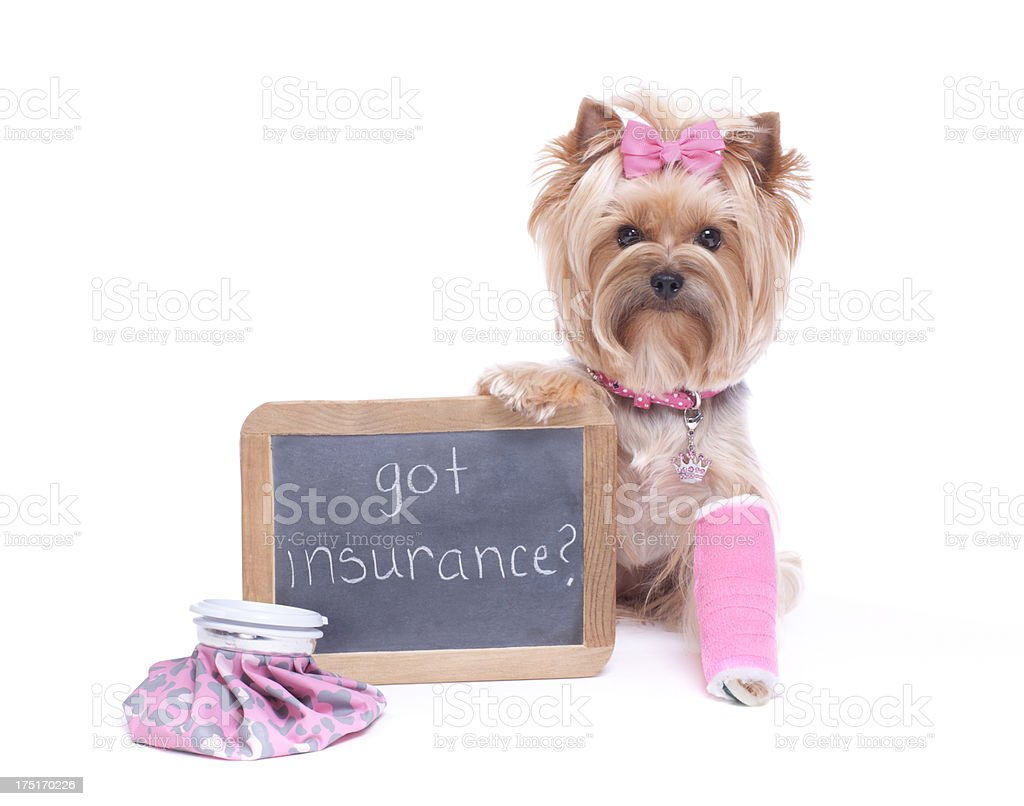 Dog Holding a Chalk Board with Broken Leg stock photo