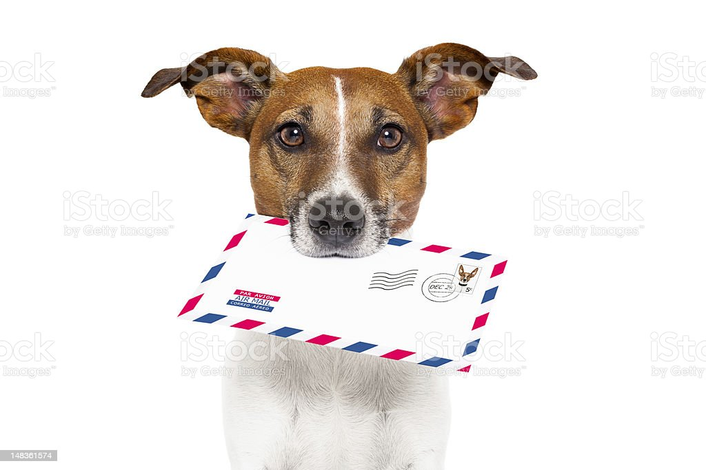 Dog holding a mail letter to the owner fast delivery stock photo
