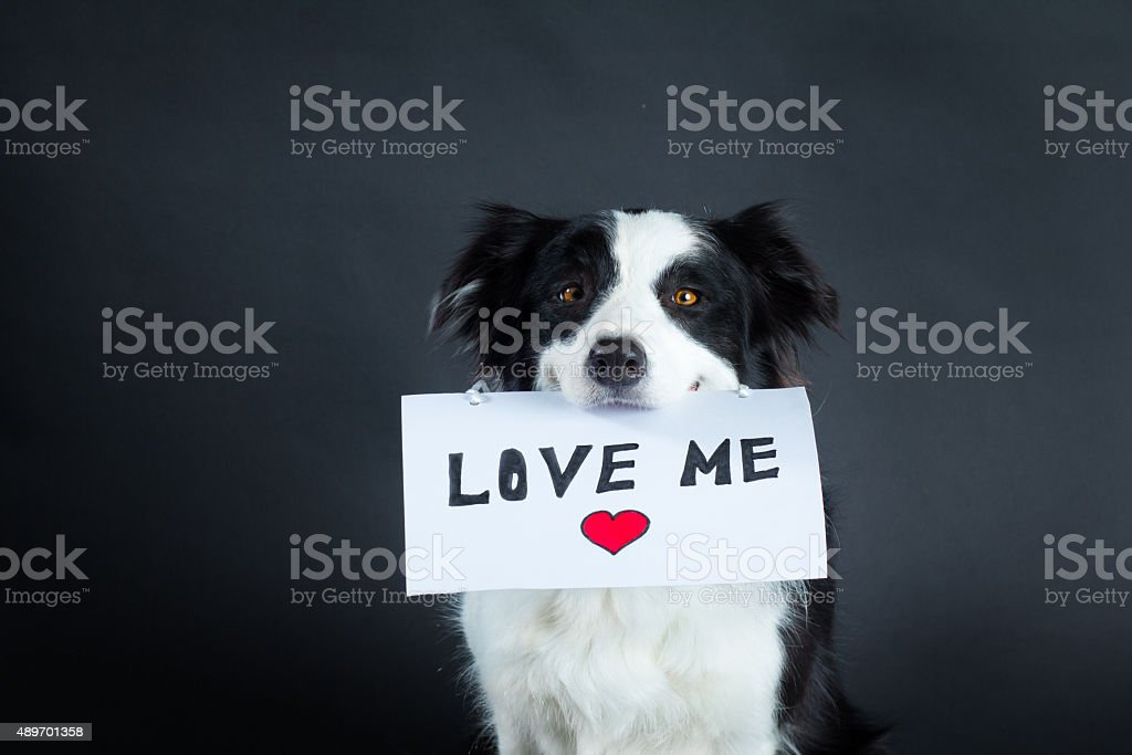 Dog holding a piece of paper with lettering stock photo