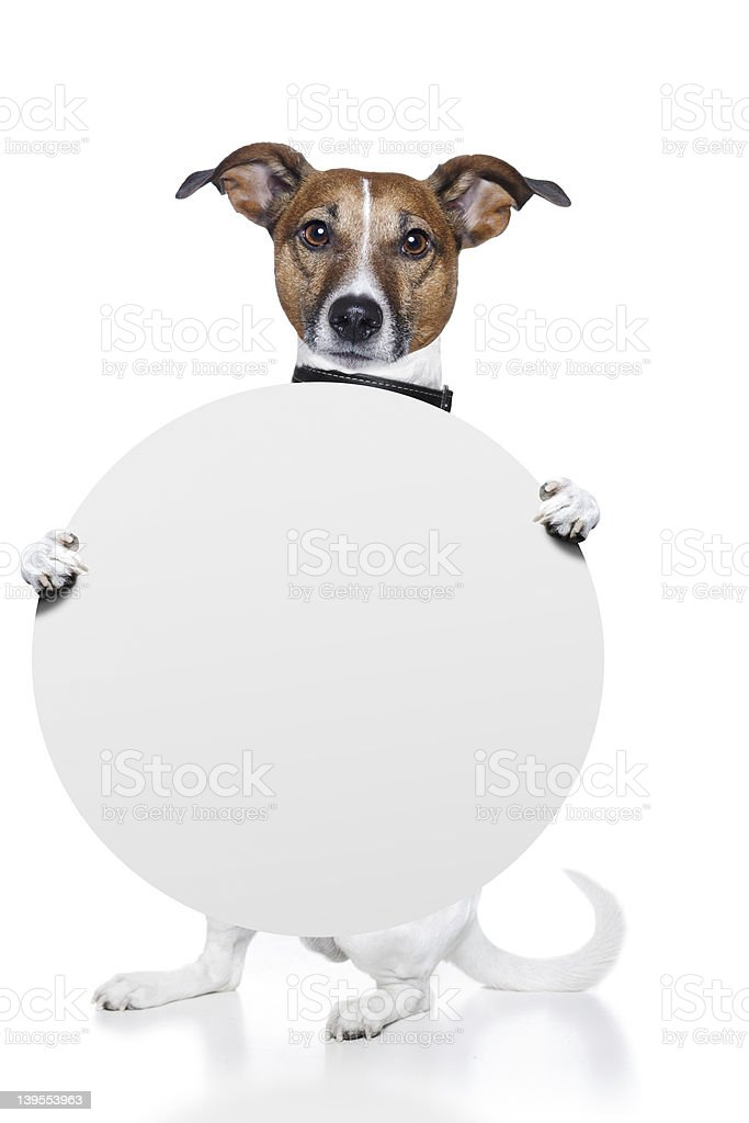 dog holding a white round banner royalty-free stock photo
