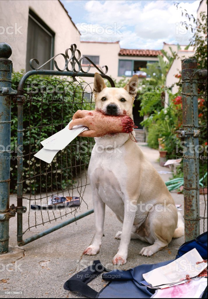 Dog Holding Mailman's Hand in Mouth stock photo