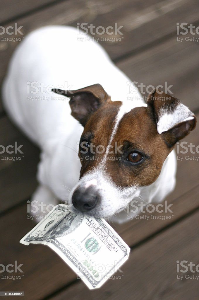 Dog Holding Money stock photo