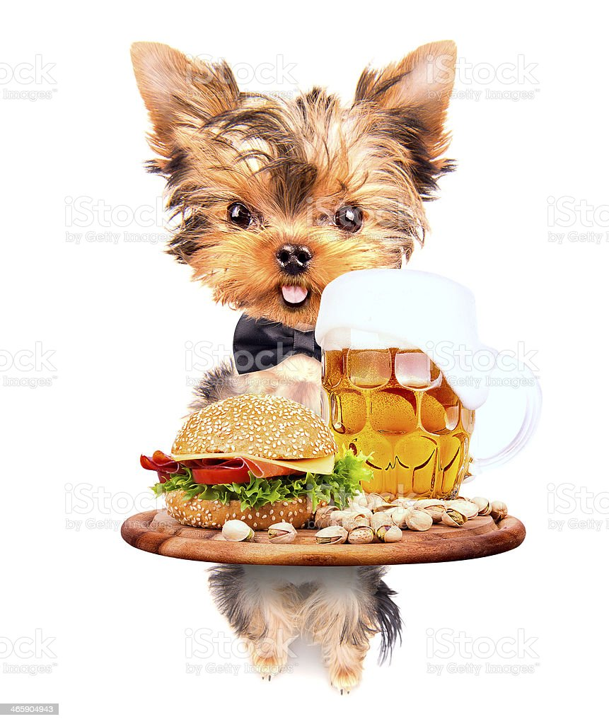 dog holding service tray with food and drink royalty-free stock photo