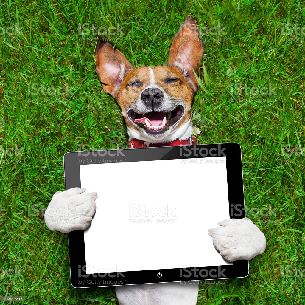 dog holding tablet stock photo