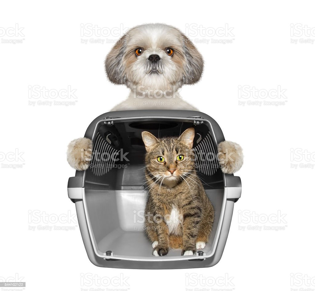 Dog holds his friend cat in container stock photo