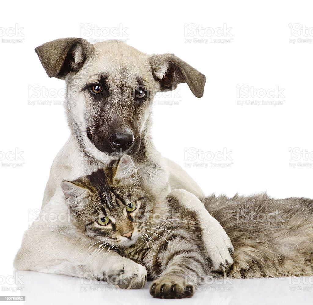 dog hugs a cat. royalty-free stock photo