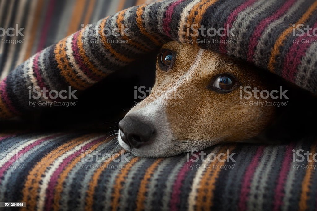 dog ill or sleeping stock photo