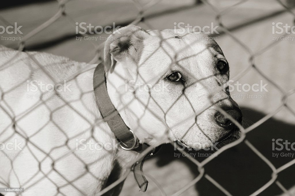 Dog in a cage royalty-free stock photo