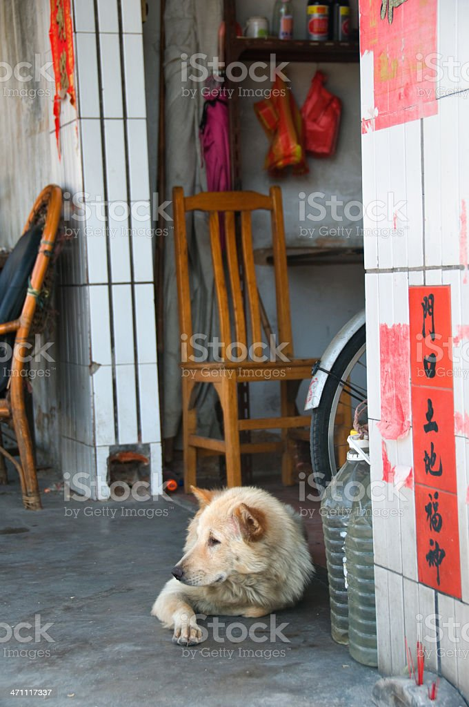 dog in a chinese village royalty-free stock photo