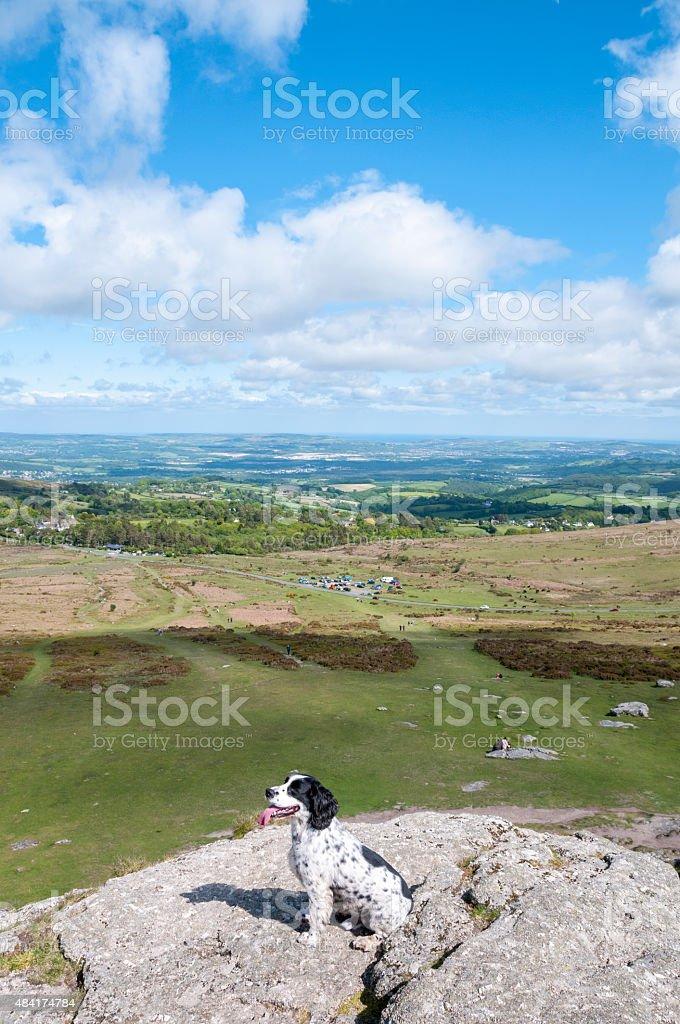 Dog In A Scenic Landscape stock photo