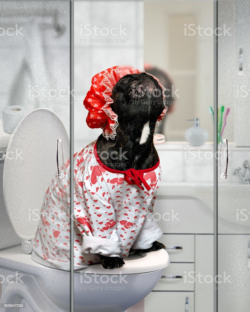 Dog in a shower cap stock photo