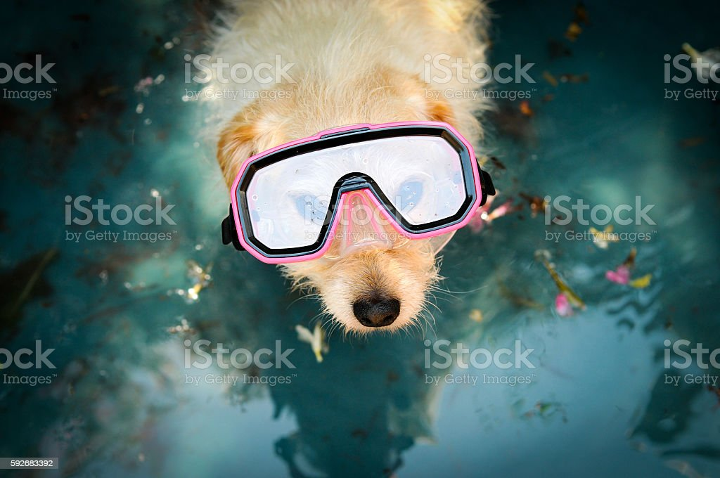 Dog in a water stock photo