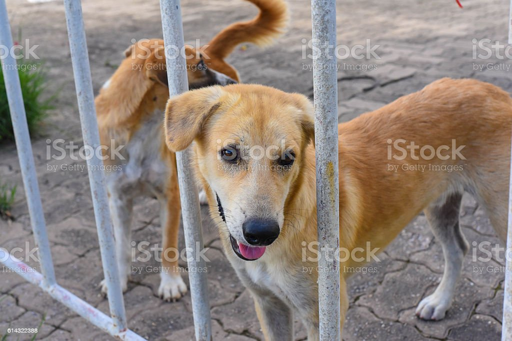 dog in an animal shelter, waiting for a home stock photo