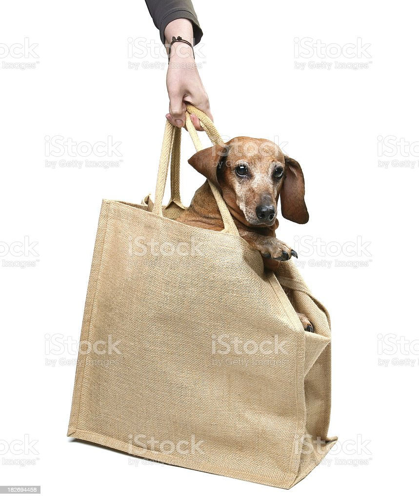 Dog in Bag royalty-free stock photo