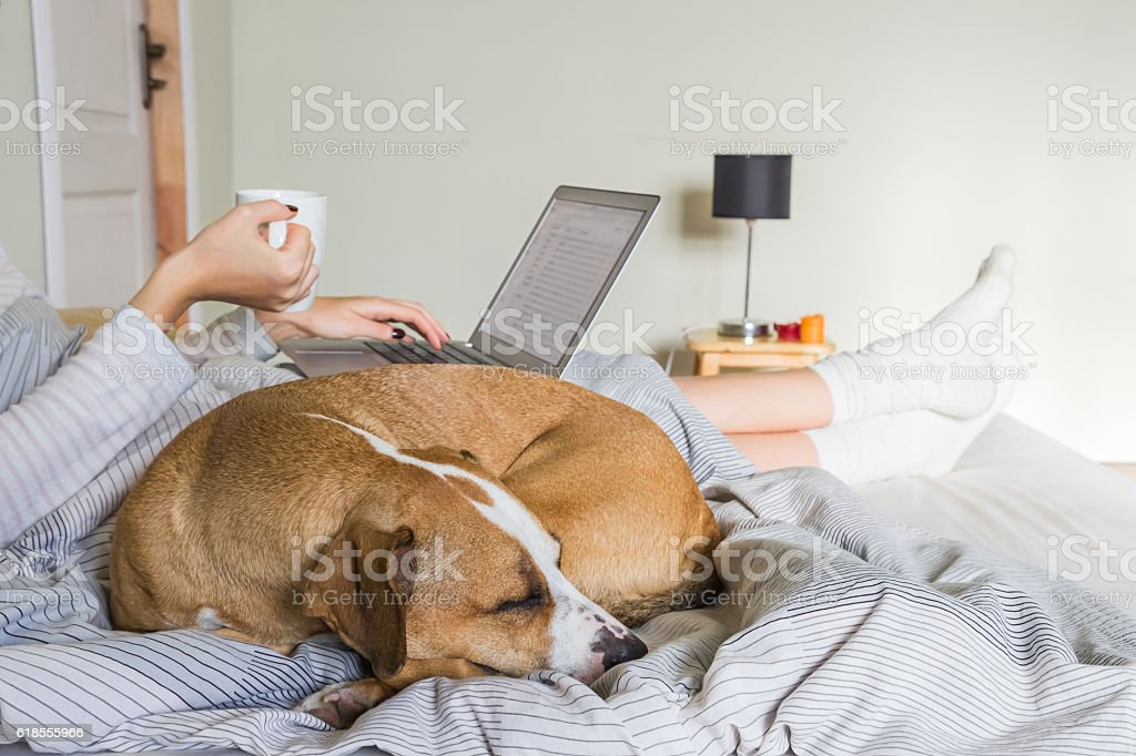 Dog in bed with human stock photo