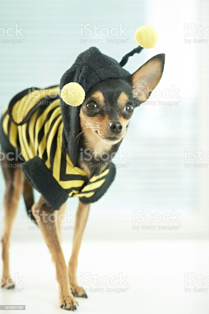 Dog in bee costume stock photo