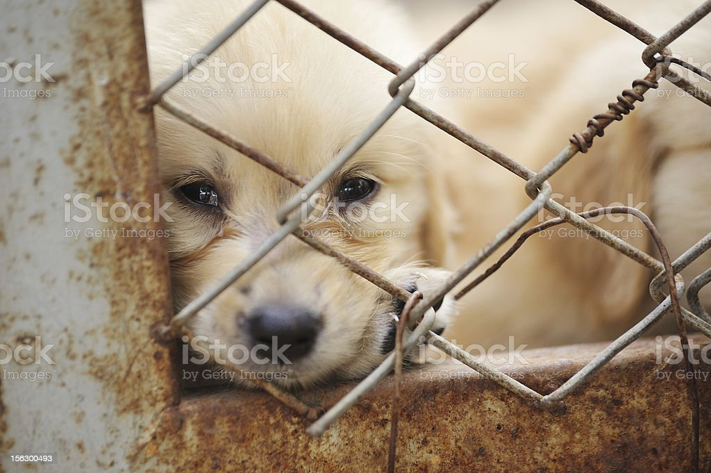 dog in cage royalty-free stock photo